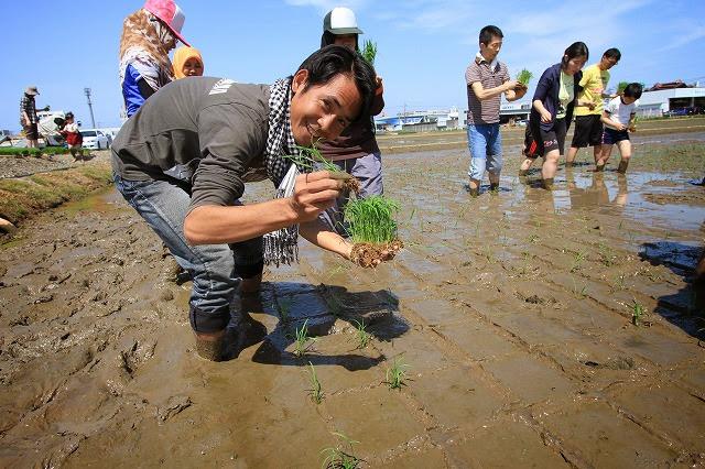 riceplant01